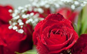 rsz_roses