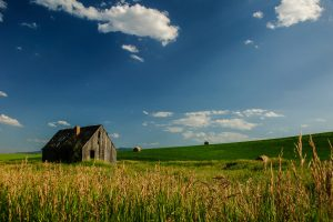 A barn standing in the middle of a field
