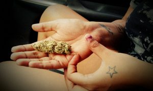 An outstretched hand with marijuana buds.