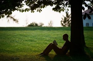 A silhouette of a person reading under a tree.