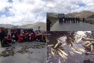 Death of fish in Minyak County. Photo TPI