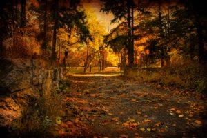 A bucolic fall scene.
