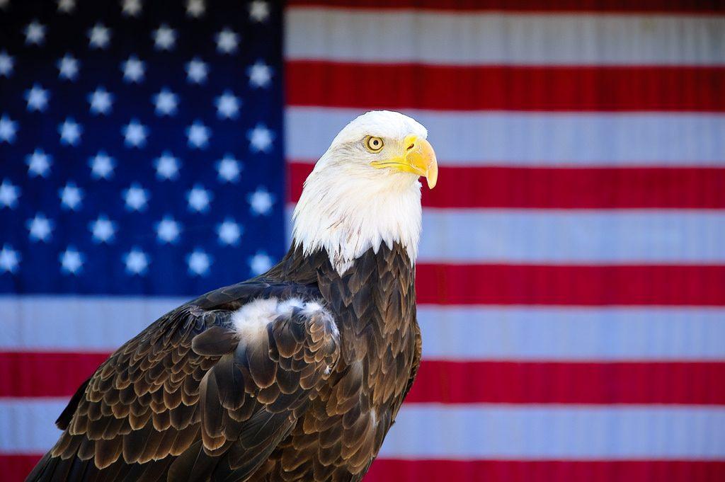 A bald eagle and a US flag
