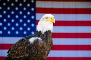 A bald eagle and a US flag