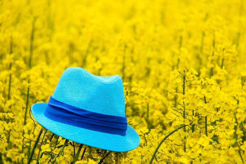 A blue hat floating on a sea of yellow flowers.