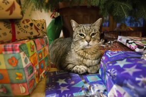 An angry cat on a pile of presents.