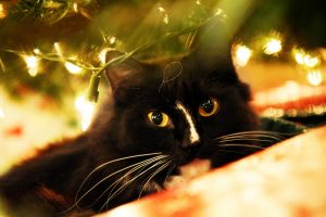 A cat under a Christmas tree.
