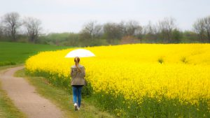 A woman with an umbrella walking past a field of yellow flowers