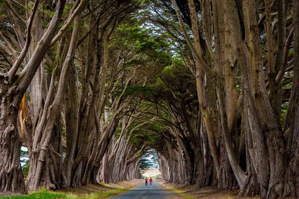 Two people walking on a tree-lined road